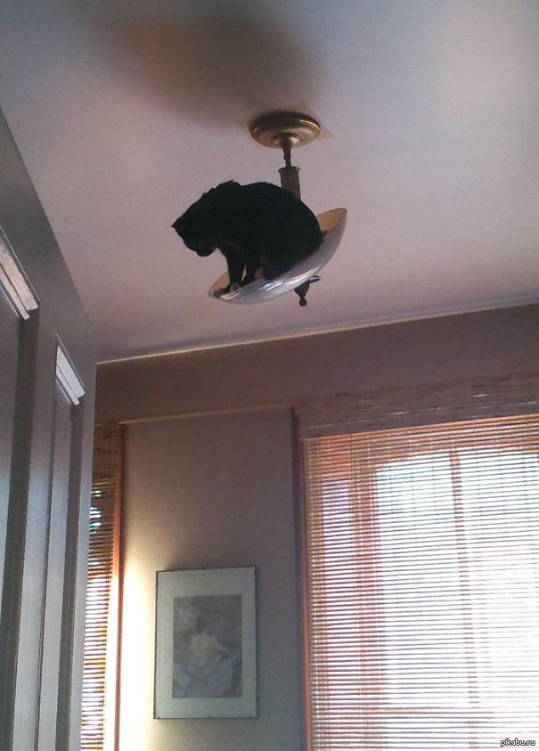 gatos-ninja-14