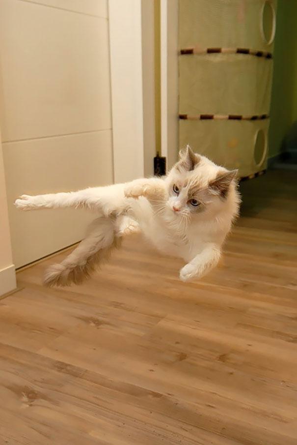 gatos-ninja-20