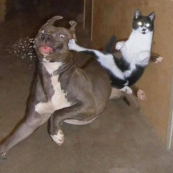 gatos-ninja-23