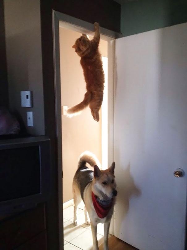 gatos-ninja-24