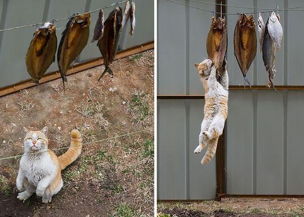 gatos-ninja-3